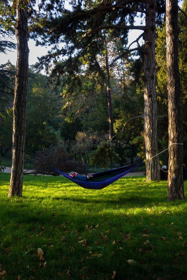 享受前天夏天在一个平安的公园 库存图片