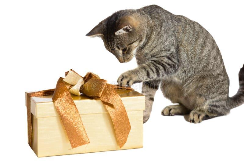 享受圣诞节的家猫 库存照片