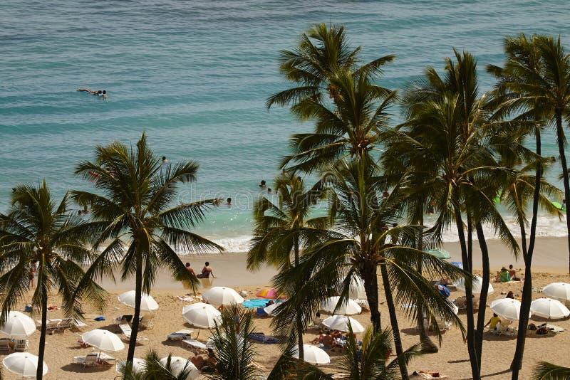 享受在威基基海滩的人们阳光 库存图片