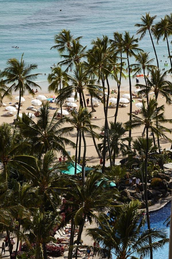 享受在威基基海滩的人们阳光 免版税库存图片