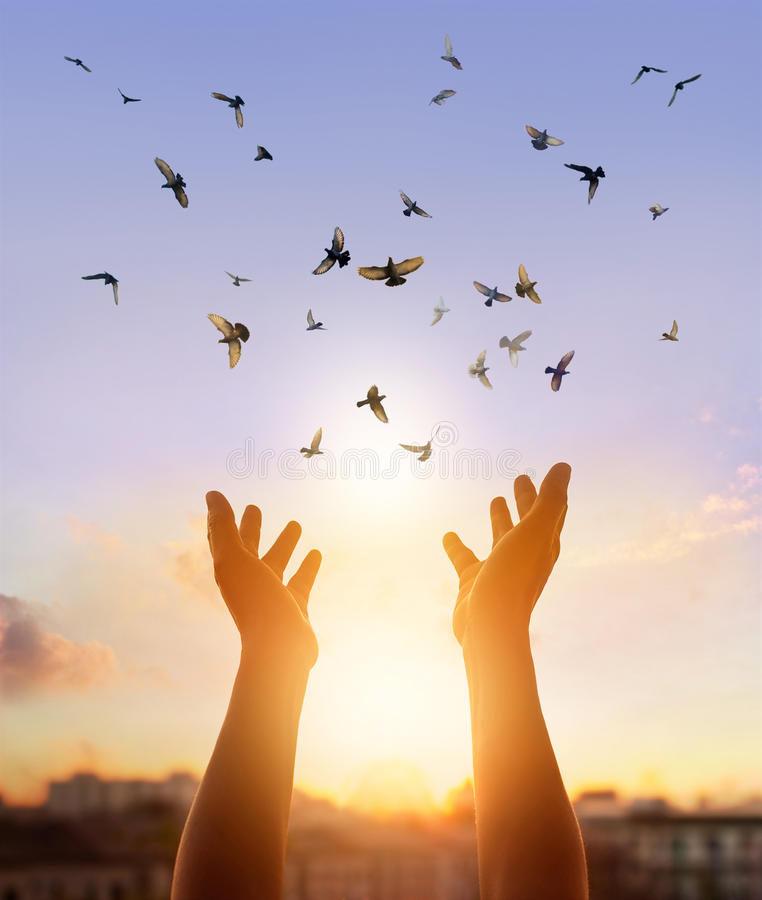 享受在日落背景的妇女祈祷和自由鸟自然 免版税库存图片