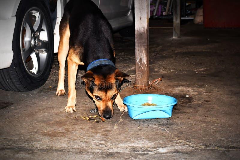 享受它的晚餐的我的狗,我夺取它的图片 免版税库存照片
