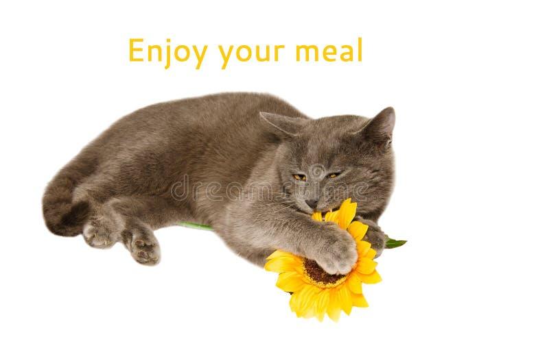 享受您的膳食 免版税图库摄影