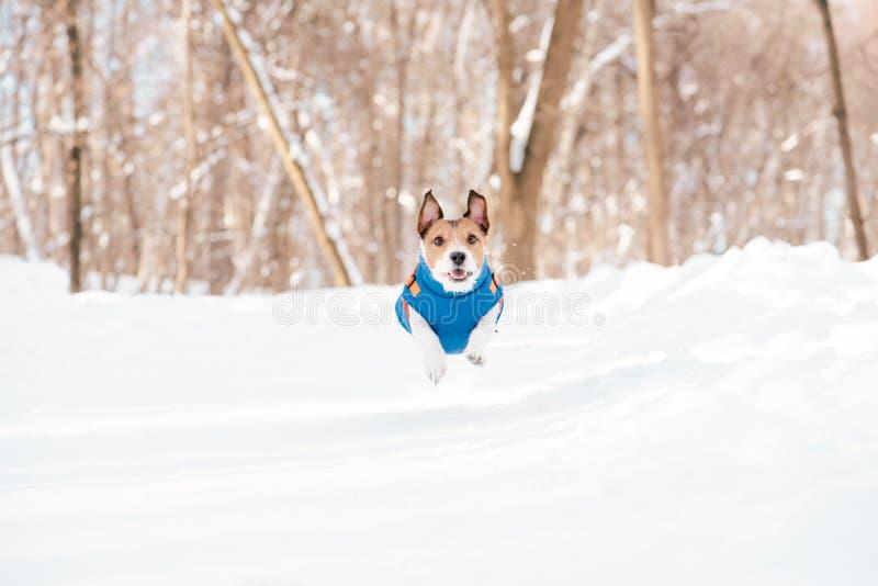 享受晴朗的冬日的愉快的狗在公园 库存图片