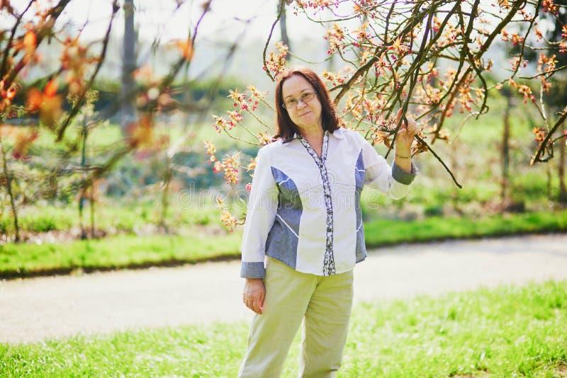 享受樱花季节的愉快的中间年迈的妇女 库存照片