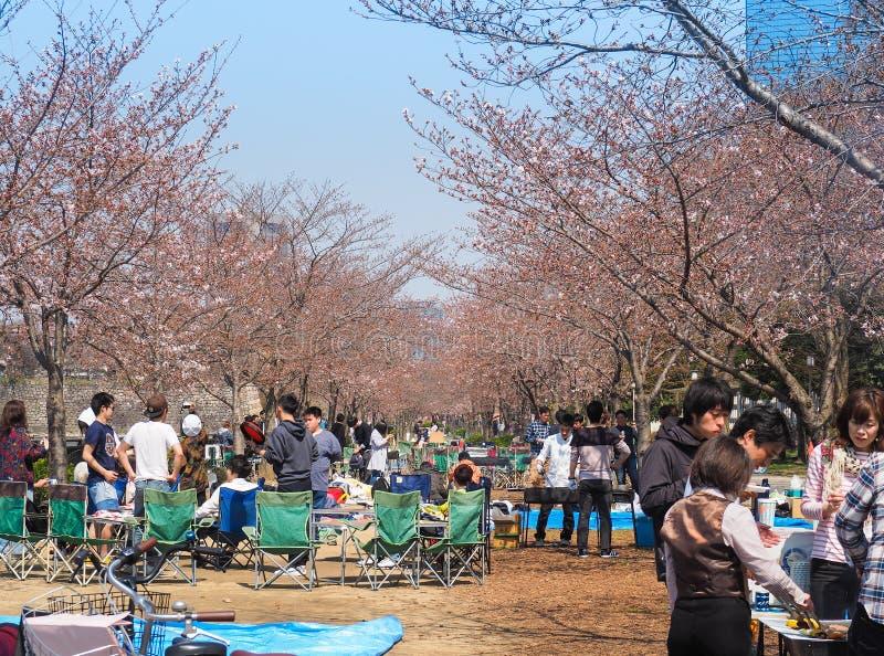 享受樱花节日的大阪人在公园 免版税库存照片