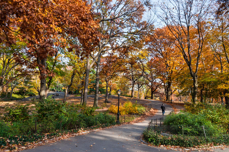 享受步行的人们在中央公园纽约 库存图片