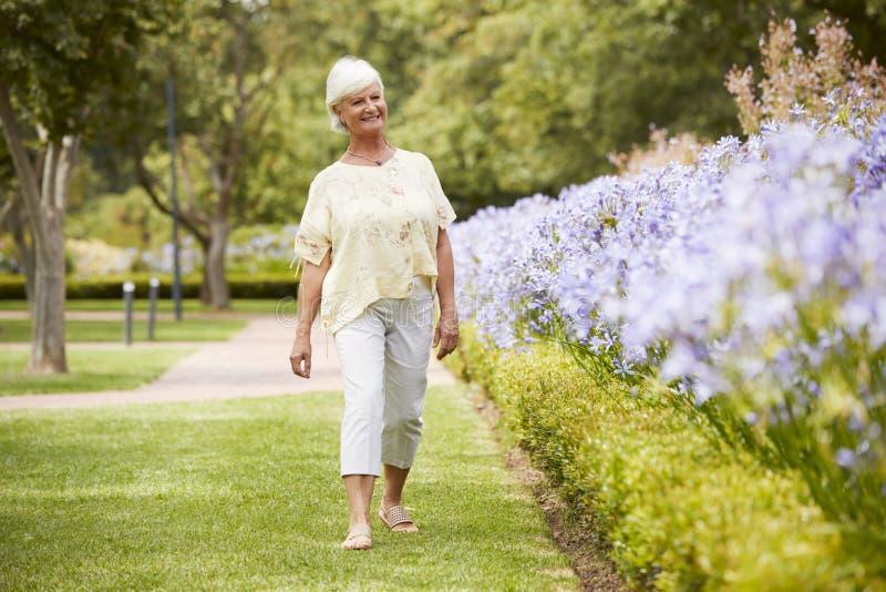 享受步行的资深妇女由花床在公园 库存图片
