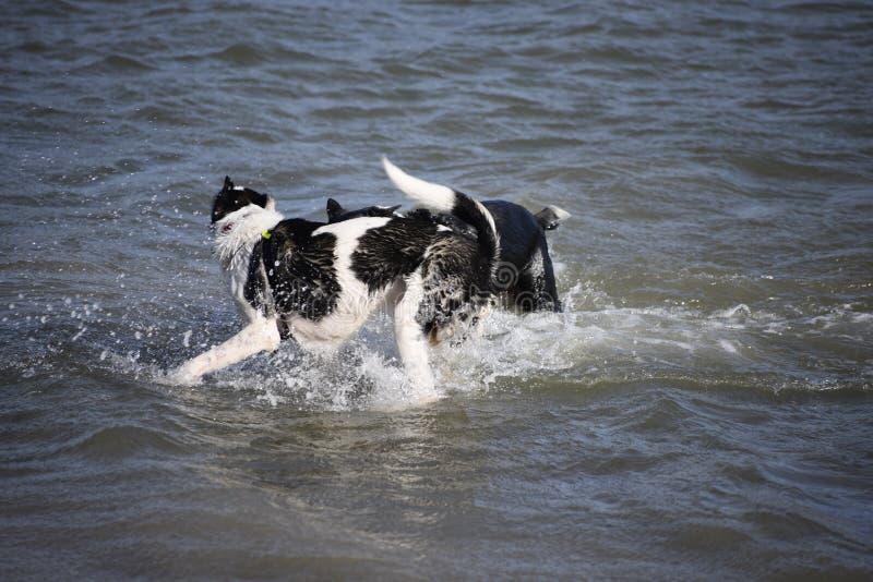 享受游泳的两个女孩 库存图片