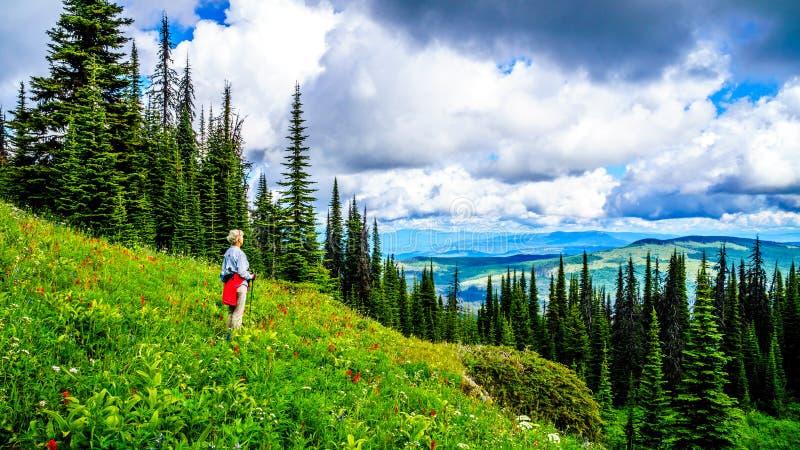 享受看法的资深妇女,当充分远足通过高山草甸从托德山时的野花 免版税库存图片