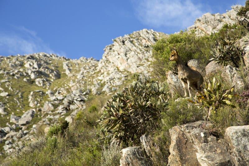 Download 享受看法 库存照片. 图片 包括有 西部, 绿色, 闹事, 女性, 南非洲的干燥台地高原, 户外, 牛仔 - 30338070
