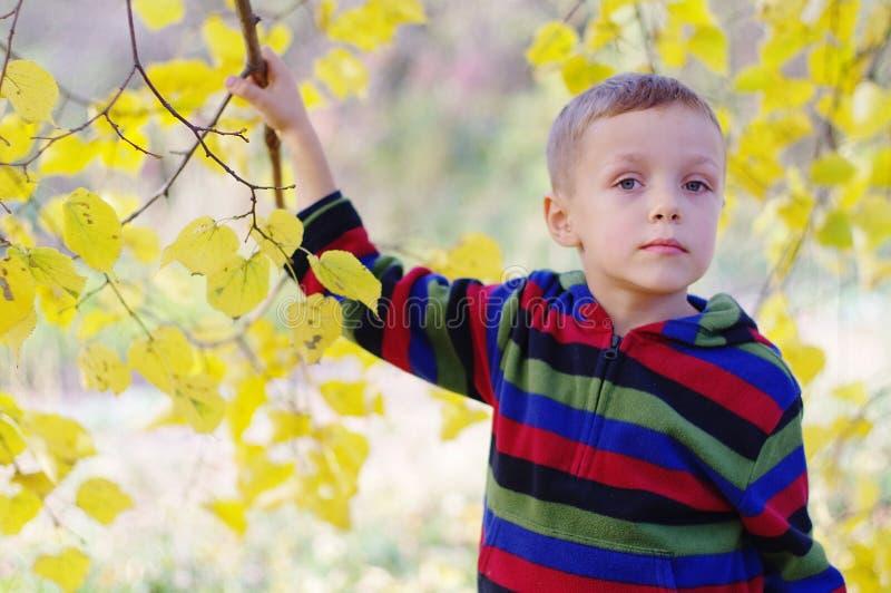 享受秋季自然的逗人喜爱的小男孩 男孩画象在秋天森林 免版税图库摄影