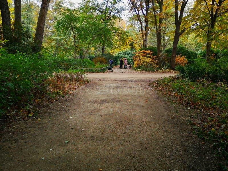 享受美好的都市自然的人们在秋天蒂尔加滕公园在柏林,德国 库存照片