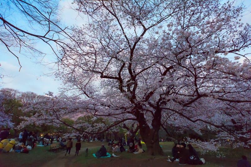 享受hanami季节在代代木公园在东京,dringink的人们 免版税库存照片