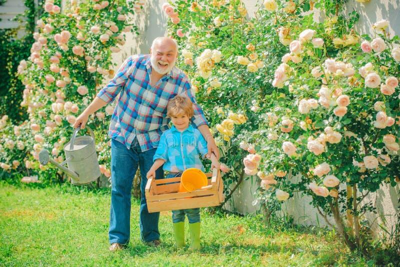 享用在有玫瑰花的庭院里的祖父和孙 花匠在庭院里 E 免版税库存照片