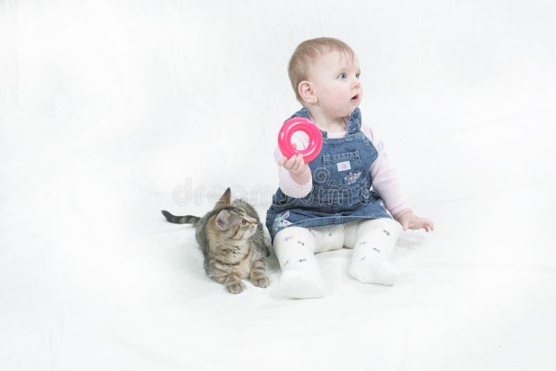 享用小猫布拉斯李树的公司 库存图片