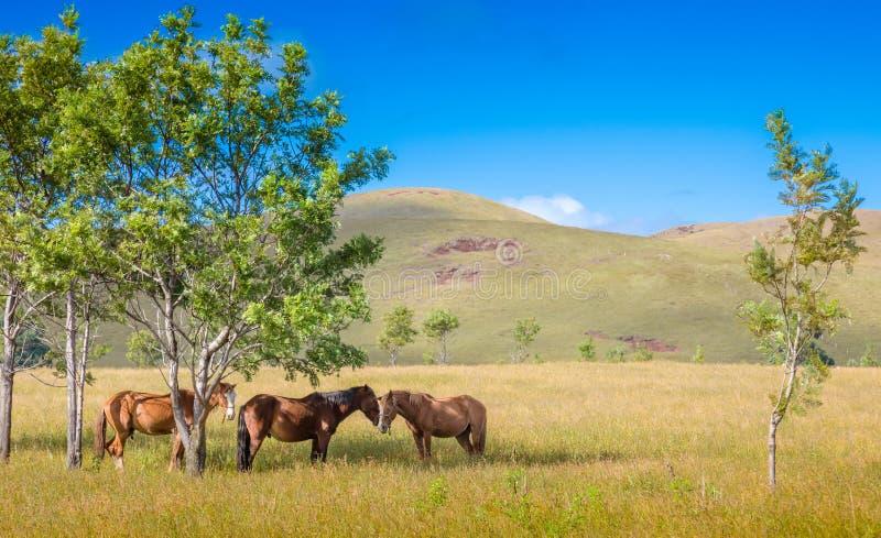 享用树荫复活节海岛的马 免版税库存图片