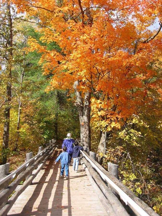 Download 享用秋天系列的颜色 库存照片. 图片 包括有 线索, 橙色, 槭树, 叶子, 结构, 土气, 自治权, 公园 - 186272