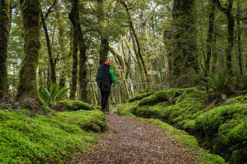 享用轨道的妇女远足者 免版税库存照片