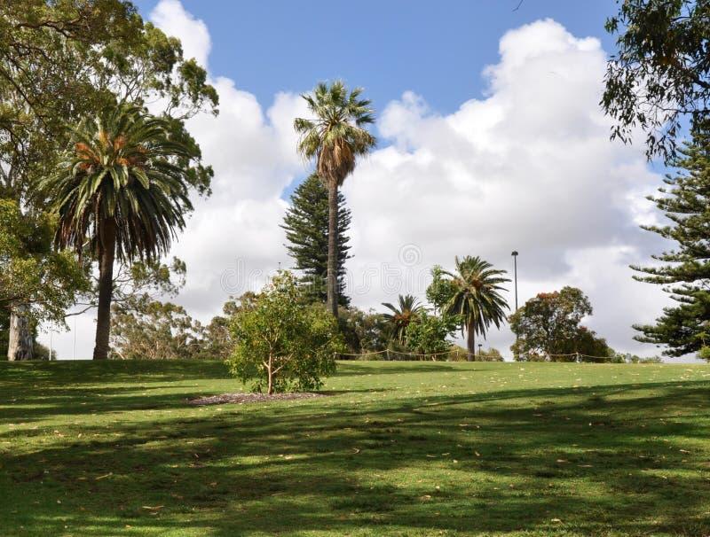 京士柏热带庭院风景 库存图片