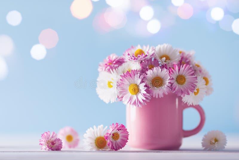 亮光背景下,粉色杯中的美丽英式雏菊花 贺卡模板 库存照片
