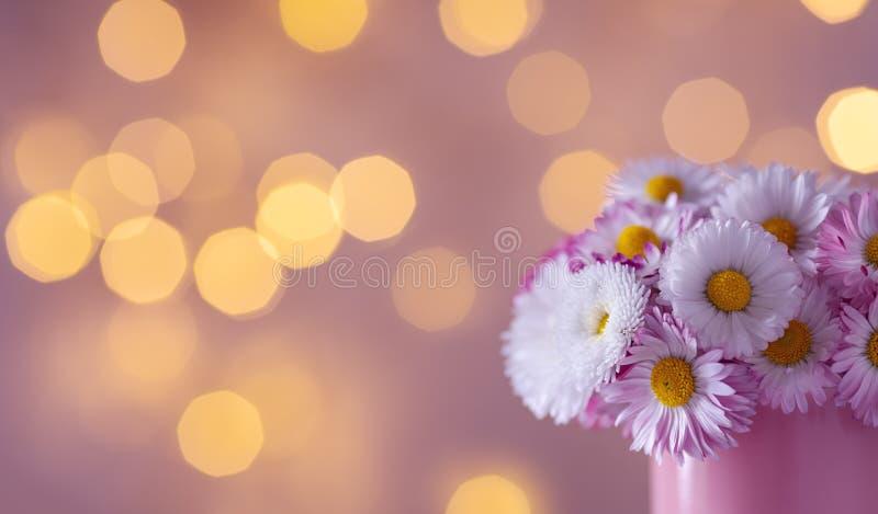 亮光背景下,粉色杯中的美丽英式雏菊花 贺卡模板 免版税库存图片