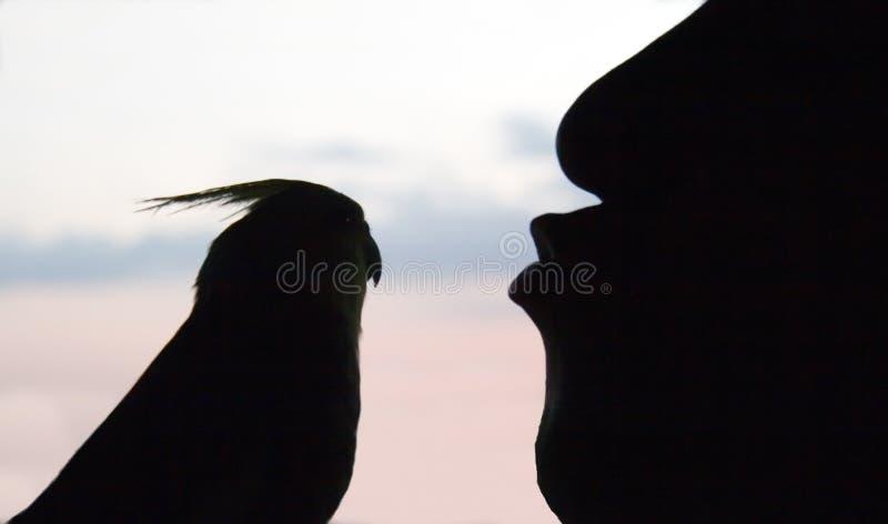 亲吻人的鸟 免版税库存照片