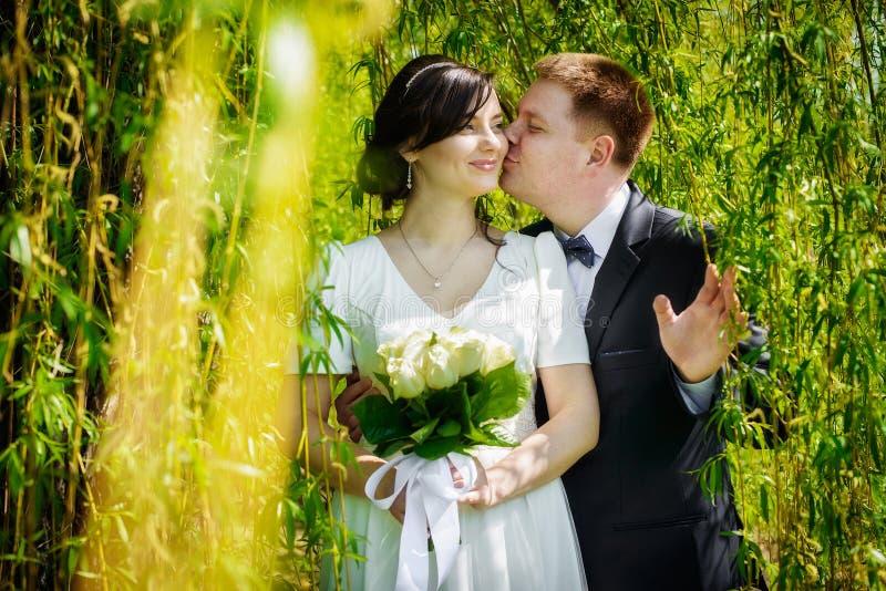 亲吻在绿色公园的婚礼夫妇 库存照片