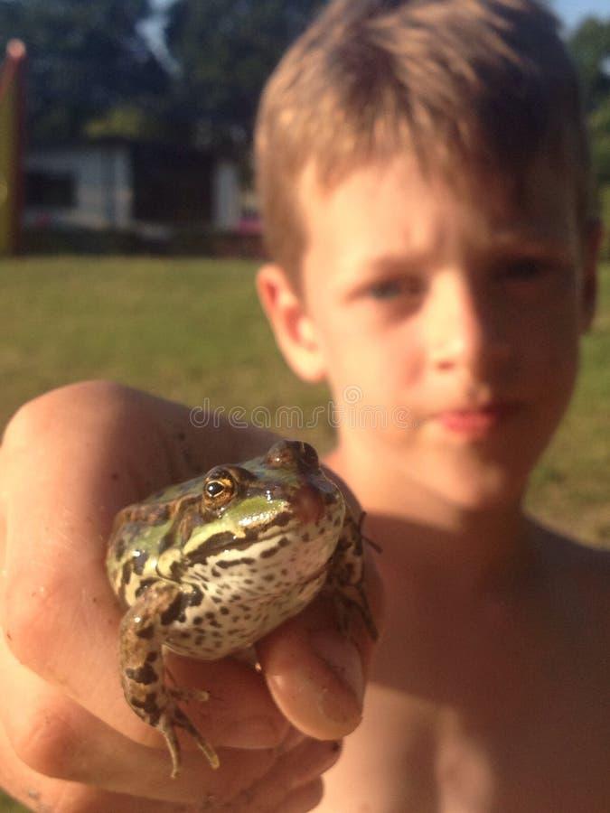 亲吻青蛙 库存照片