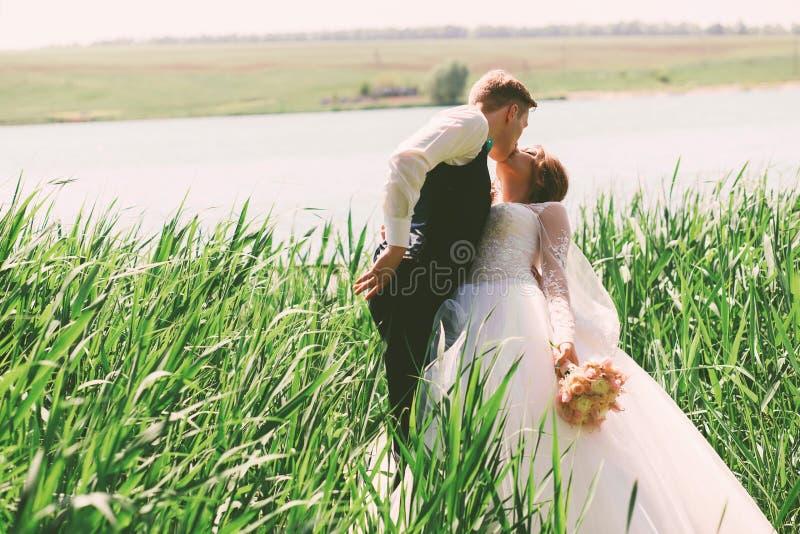 亲吻高草的新郎新娘 免版税库存照片