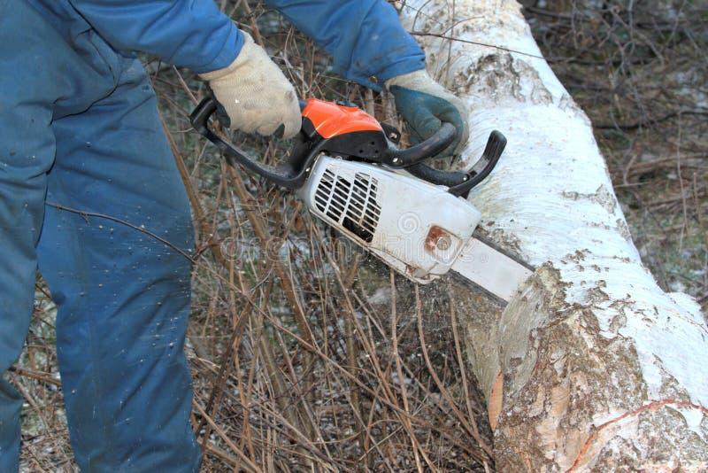人与锯的剪切结构树 免版税库存照片