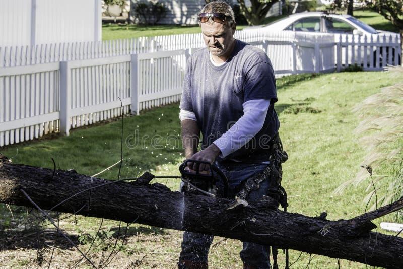 人与靠气体发动的锯的切口树 库存照片