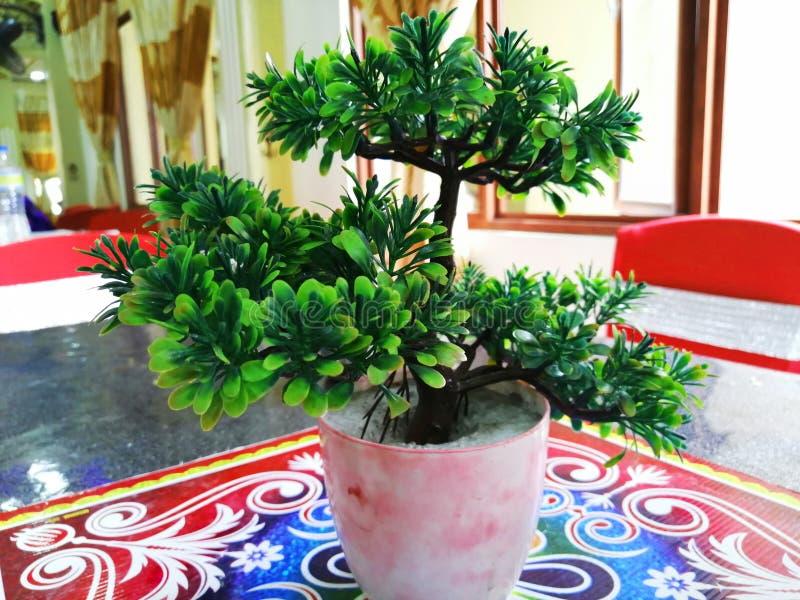 人为小绿色植物 免版税库存照片