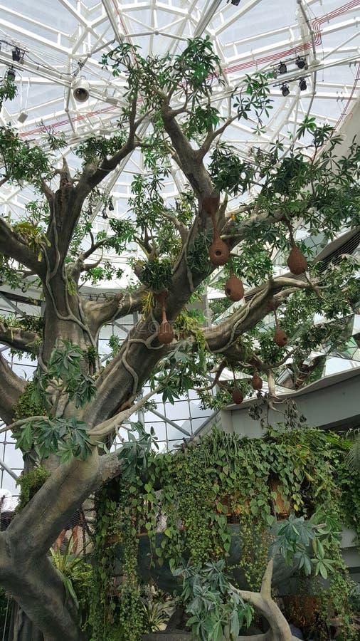人为树,垂悬的巢,玻璃屋顶 库存照片
