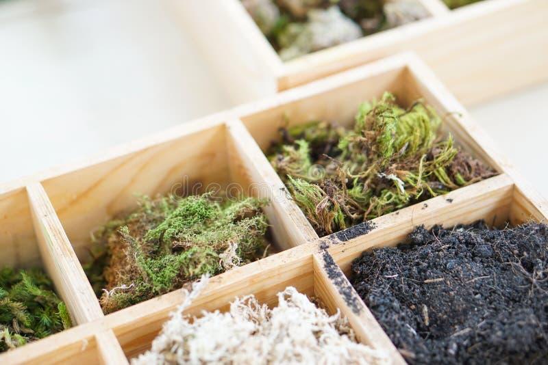 人为玻璃容器供应成套工具青苔植物土装饰箱子 库存照片