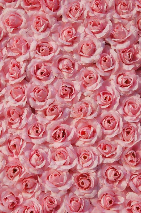 人为粉红色上升了 免版税库存图片
