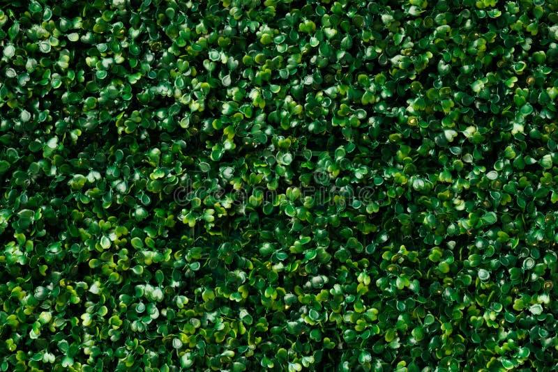 人为绿草-绿色留下背景纹理 库存图片