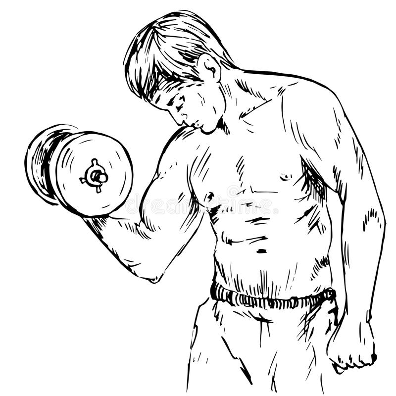 人举哑铃,震动胳膊肌肉,二头肌,三头肌,在健身房的健身 皇族释放例证