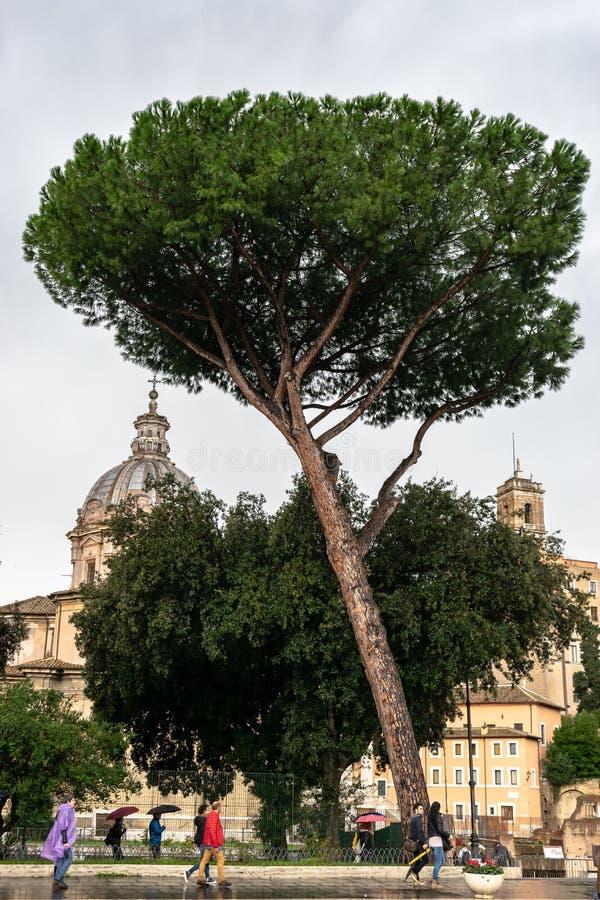 人们、树和罗马式建筑大厦在罗马,意大利 免版税库存图片