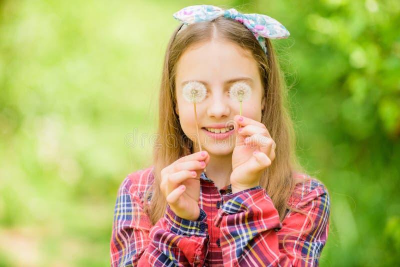 人们为什么在蒲公英祝愿 庆祝夏天 蒲公英美好和充分的象征主义 作为蒲公英的光 ? 库存照片