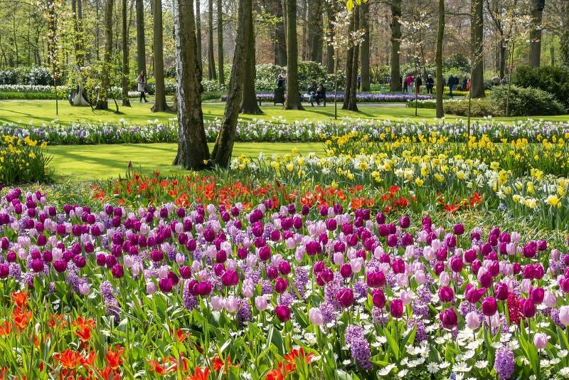 人们在利瑟,荷兰享受丰盈美丽,开花,在花公园keukenhof的春天花 免版税库存照片