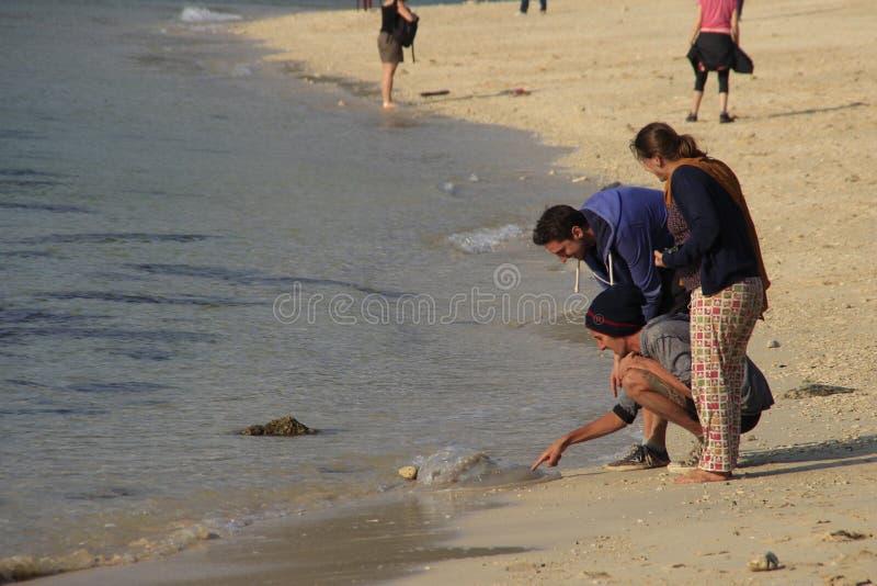 人们在岸的沙子发现了一只水母被投掷 库存图片