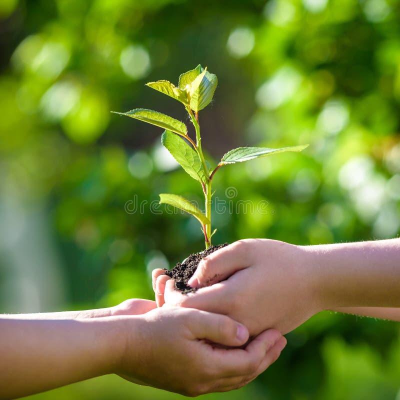 人们在手上的拿着年幼植物反对绿色春天backgro 免版税库存图片
