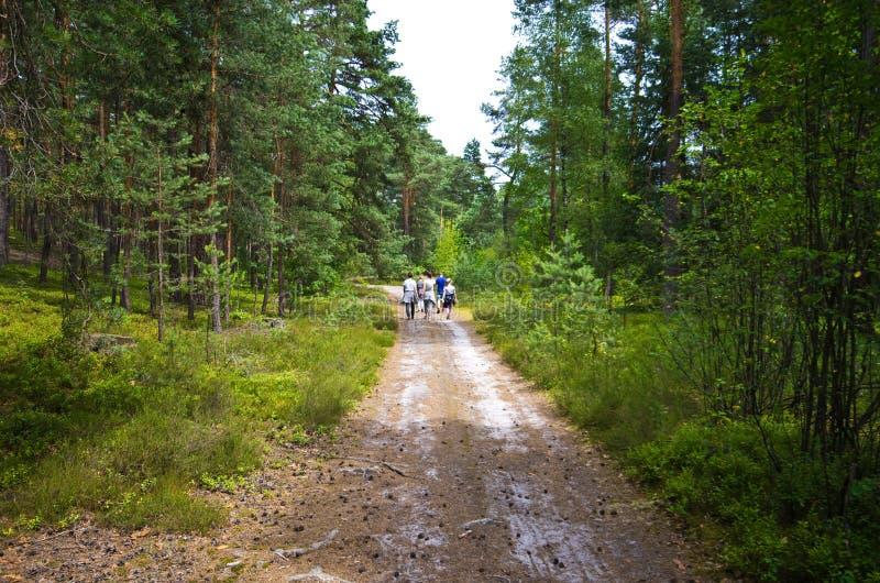 人们在Roztocze波兰森林里走 库存照片