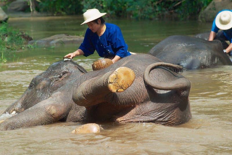 人们在Sa Noi Mae河沐浴大象在Sa Mae大象阵营在清迈,泰国 免版税图库摄影