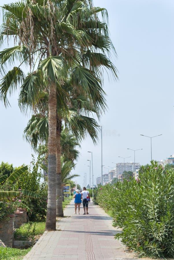 人们沿在棕榈树和绿色灌木中的道路走 库存图片
