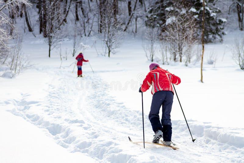 人们滑雪在森林里的在一好日子,从后面的看法 r 图库摄影