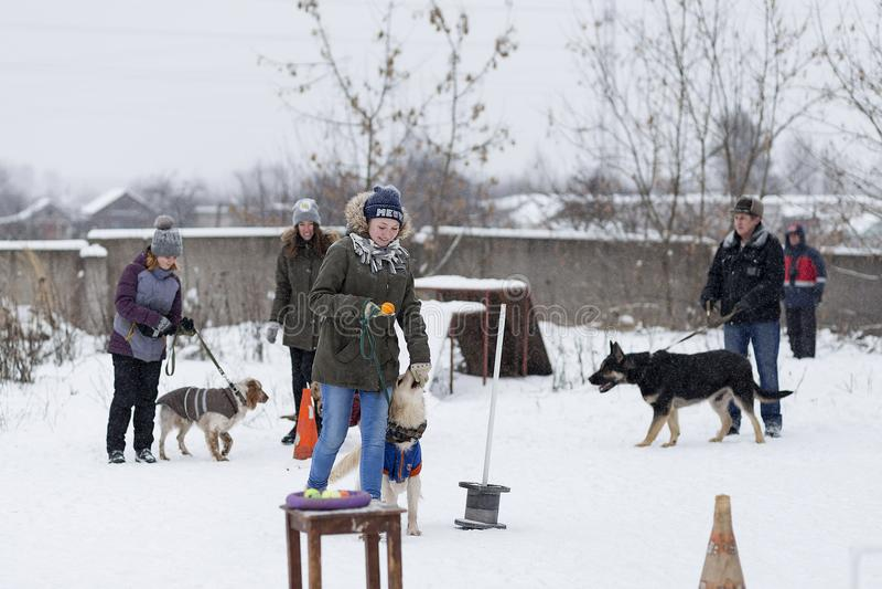 人们训练他们的狗,狗走 库存图片