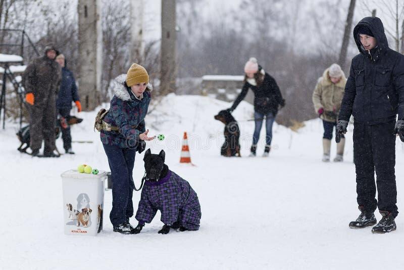 人们训练他们的狗,狗走 免版税图库摄影