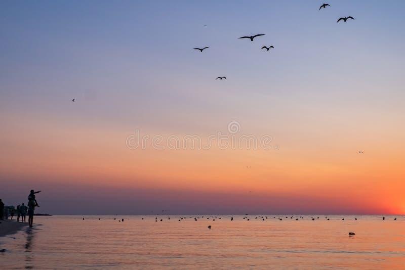 人们遇见在海滩的五颜六色的日出到海 人和海鸥剪影  父亲抱他的一个孩子 免版税库存照片